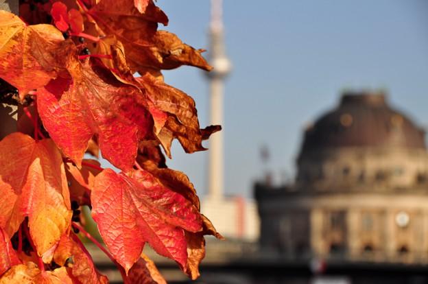 121021__autumnleaves-624x414
