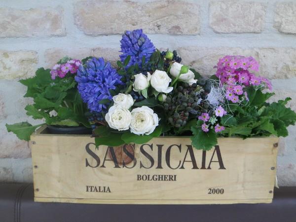 Sassicaia_Fruehling